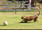 https://lolkot.ru/2016/07/08/vzbodritel-igry/