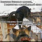 https://lolkot.ru/2014/06/24/vzyatka/