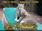 https://lolkot.ru/2013/05/12/ya-dazhe-dver-otkryla-kogda-tebya-zhdala-2/
