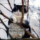 https://lolkot.ru/2011/06/18/ya-koala/
