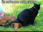 https://lolkot.ru/2011/03/15/ya-pobedilo-tibya/
