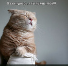 https://lolkot.ru/2010/09/19/ya-zazhmuryus/