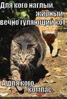 https://lolkot.ru/2013/03/24/ya-znayu-parol-ya-vizhu-oriyentir/
