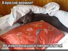 https://lolkot.ru/2012/01/02/yaponskiye-podushki/