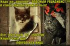 https://lolkot.ru/2014/05/16/yaytsenyk/