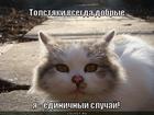 https://lolkot.ru/2012/08/04/yedinichnyy-sluchay/
