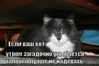 https://lolkot.ru/2011/06/20/yesli-kot-ulybayetsya/