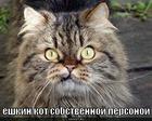 https://lolkot.ru/2010/08/11/yoshkin-kot/