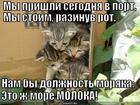 https://lolkot.ru/2015/08/27/yungi-molochnyh-morey/
