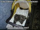 https://lolkot.ru/2012/02/21/za-nim-uhazhivayut/