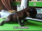 https://lolkot.ru/2011/01/07/za-pivom/
