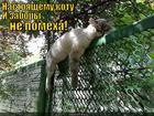https://lolkot.ru/2014/01/20/zaborchanin/