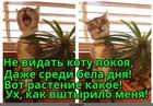 https://lolkot.ru/2016/04/22/zaboristoye-rasteniye/