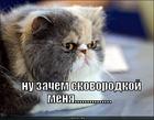 https://lolkot.ru/2010/09/14/zachem-skovorodkoy/