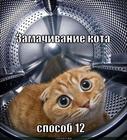 https://lolkot.ru/2011/10/30/zamachivaniye-kota-4/