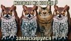https://lolkot.ru/2010/12/08/zamaskiruysya/