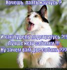 https://lolkot.ru/2014/02/22/zamenitel-idiyentichnyy-naturalnomu/