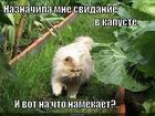 https://lolkot.ru/2014/12/06/zaochnyy-papashka/
