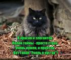https://lolkot.ru/2018/05/02/zaplanirovano-zaraneye/