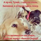 https://lolkot.ru/2016/10/26/zastolblennoye-kreslo/