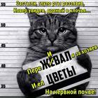 https://lolkot.ru/2017/01/18/zastyli-glupo-rty-razzyaviv-kover-uvidev-dranyy-v-klochya-__-i-pere-ya-za-hozyayev-i-yel-na-nervnoy-pochve/