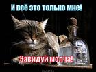 https://lolkot.ru/2011/11/27/zaviduy-molcha/