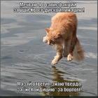 https://lolkot.ru/2014/06/18/zaytsefila-k-otvetu/