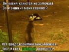 https://lolkot.ru/2015/03/31/zelenyy-svet/