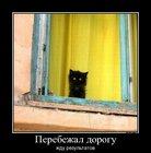 https://lolkot.ru/2012/05/09/zhdu-rezultatov/
