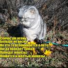https://lolkot.ru/2017/11/23/zheltyye-tyulpany-priznaki-vesny/