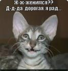 https://lolkot.ru/2012/02/27/zhenimsya/