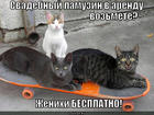 https://lolkot.ru/2014/02/05/zhenishki/