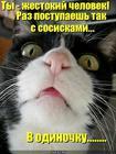 https://lolkot.ru/2010/07/26/zhestokiy-chelovek/