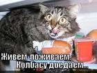 https://lolkot.ru/2013/11/03/zhili-ne-tuzhili/