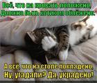 https://lolkot.ru/2014/02/21/zhizn-koshachya/