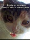 https://lolkot.ru/2010/05/16/zhizn-whiskas/