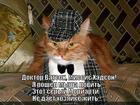 https://lolkot.ru/2013/12/11/zhizni-netu/