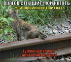 https://lolkot.ru/2011/04/11/zorkiy-zhyoltyy-glaz/