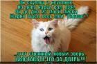 https://lolkot.ru/2013/03/24/zveryuga/