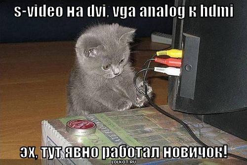 Кот профессионал