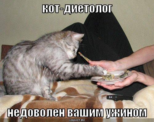 кот-диетолог