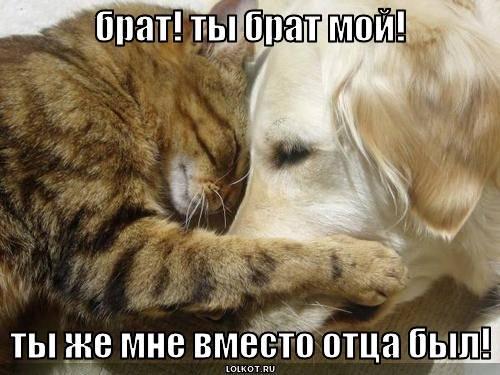 брат! ты брат мой!