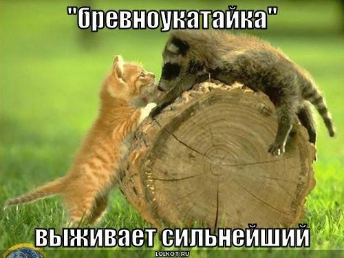 """""""бревноукатайка"""""""