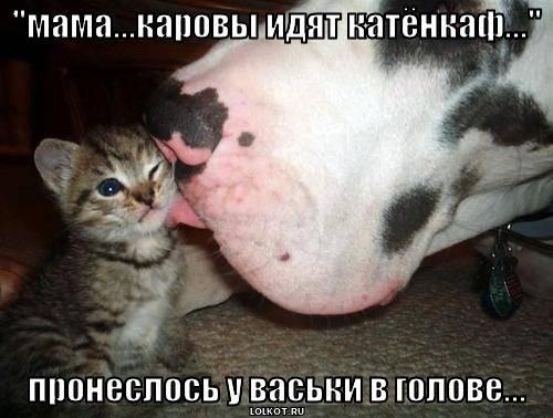 """мама...каровы идят катёнкаф..."""