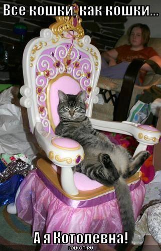 Все кошки, как кошки...