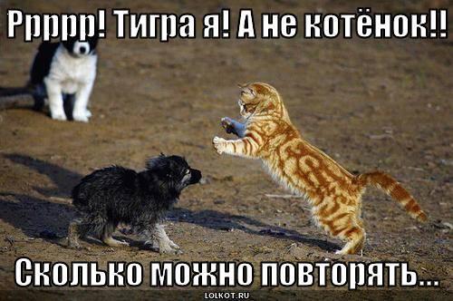 Ррррр! Тигра я! А не котёнок!!