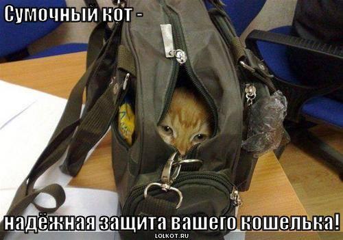 cумочный кот