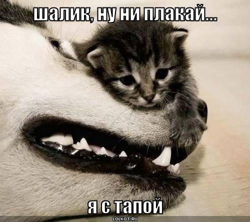 шалик, ну ни плакай...