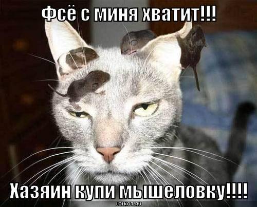 с миня хватит!!!