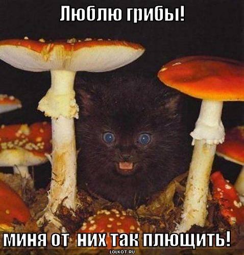 Люблю грибы!